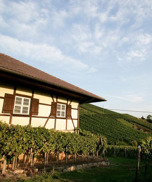 Weintour in Untertürkheim